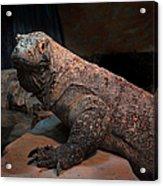 Monitor Lizard Acrylic Print