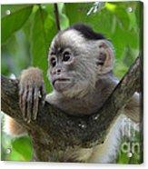 Monkey Business Acrylic Print by Bob Christopher