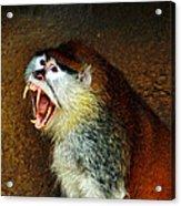 Monkey Fangs Acrylic Print
