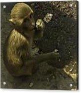 Monkey Acrylic Print by Jennifer Burley