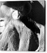 Monkey See Monkey Do Acrylic Print