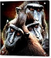 Monkey What Are You Looking At Acrylic Print