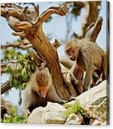 Monkeys On Mountain Acrylic Print