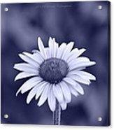 Monochrome Aster Acrylic Print