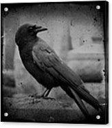 Monochrome Crow Acrylic Print