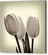 Monochrome Tulips With Vignette Acrylic Print