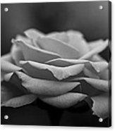 Monotone Rose Acrylic Print