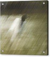 Monsoon Loon Acrylic Print