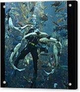 Monterey Bay Aquarium Diver Acrylic Print
