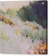 Monterey Dunes Acrylic Print