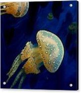 Monterey Jellyfish 1 Acrylic Print