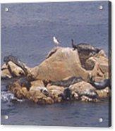 Monterey Sun Bath Acrylic Print