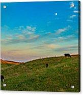 Moo Moon Acrylic Print