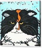 Moo Shu Cat Acrylic Print by Kristi L Randall