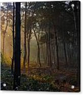 Moody Forest Happy Sun Acrylic Print