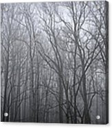 Moody Outlook Acrylic Print