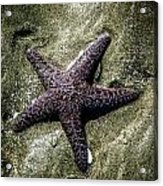 Moody Starfish I Acrylic Print