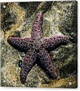 Moody Starfish IIi Acrylic Print