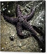 Moody Starfish Iv Acrylic Print