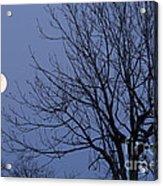Moon And Bare Tree Acrylic Print