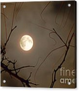 Moon Behind Branches Acrylic Print by Deborah Smolinske