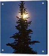 Moon Behind Spruce Acrylic Print