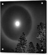 Moon Dog Acrylic Print