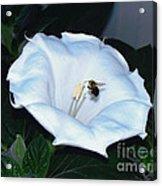Moon Flower Acrylic Print