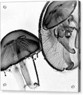 Moon Jellyfish - Black And White Acrylic Print