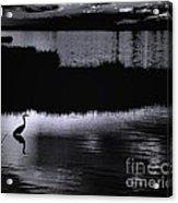 Moon N Ma Bird 2 Acrylic Print