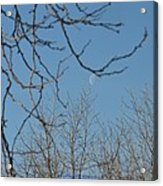 Moon On Treetop Acrylic Print