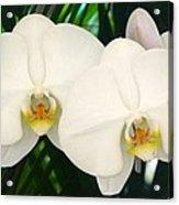 Moon Orchid Pair Acrylic Print