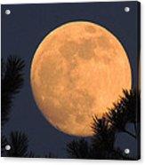 Moon Pines Acrylic Print