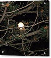 Moon Through Pines Acrylic Print