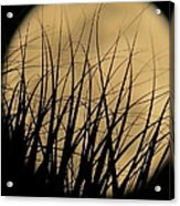 Moon Through The Palms Acrylic Print