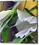 Moonflowers  Acrylic Print