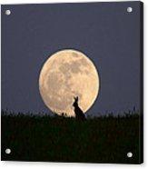 Moongazer Acrylic Print by Steve Adams