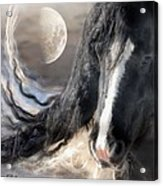 Moonlight And Valentino Acrylic Print