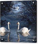 Moonlight Swim Acrylic Print