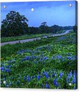 Moonlit Bluebonnets Acrylic Print