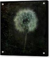 Moonlit Dandelion Acrylic Print