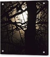 Moonlit Tree In The Forest Acrylic Print
