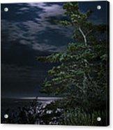 Moonlit Treescape Acrylic Print