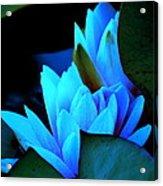 Moonlit Waterlilies Acrylic Print