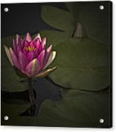 Moonlit Waterlily Acrylic Print by Jill Balsam