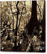 Moores Creek Swamp Acrylic Print