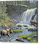 Moose Falls Acrylic Print by Paul Krapf