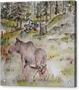 Moose Is Loose Album Acrylic Print