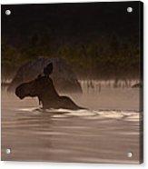 Moose Swim Acrylic Print