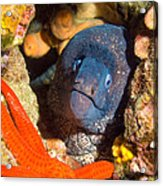 Moray And Starfish Acrylic Print